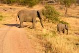 Mom and baby elephants, African Savanna.