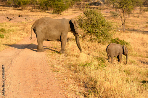 Mom and baby elephants, African Savanna. Poster