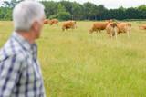 Farmer checking herd of cattle - 183962134