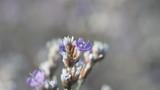Small Defocused blue Flowers - 183968952