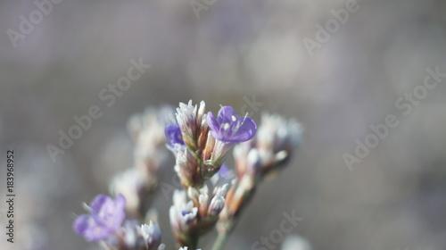 Small Defocused blue Flowers