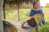 Old woman farmer sitting at cabin in rice field, selective and soft focus - 183974989