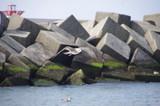 Möwe am Ufer vor Quadern - 183998973