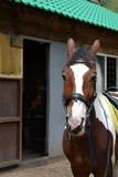 Спокойный и полный уверенности взгляд лошади - 184017781
