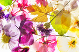 colorful dry flowers - 184024572