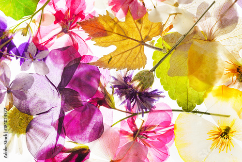 colorful dry flowers Poster