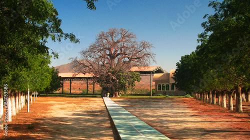 In de dag Baobab St Maryam Deari chapel, lying in a baobab, Keren, Eritrea