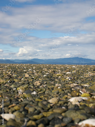 Staande foto Bleke violet low angle view over rocks and shells at low tide