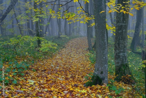 Tuinposter Herfst Ride in forest