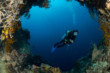 sea fan on the slope of a coral reef with a diver at depth - 184048171