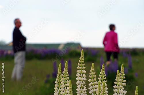 Plexiglas Lavendel Silhouettes floues derrière un massif de fleurs