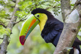 Keel-Billed Toucan (Ramphastos sulfuratus), Limon, Costa Rica. - 184064343