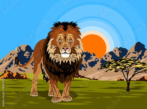 Lion against the background of the African landscape