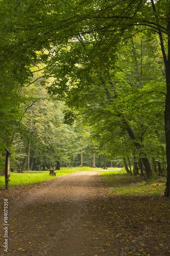 In de dag Weg in bos Las