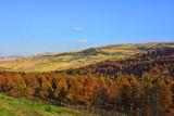 Italia, tipiche colline coltivate dei monti Appennini. Paesaggio 5