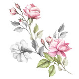 The image of a rose.Hand draw watercolor illustration - 184094723
