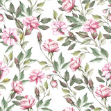 Seamless pattern with roses. Hand draw watercolor illustration - 184094789