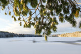 Winter landscape scenery behind the snow covered pine tree branches. - 184094992