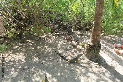 In de dag Weg in bos Iguanas