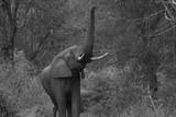 Afrique du sud, ses éléphants, son coucher de soleil, safari