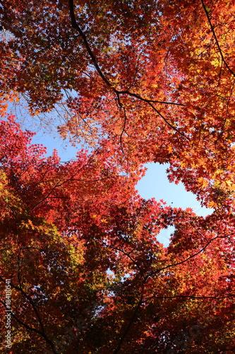 Staande foto Bruin 紅葉の風景