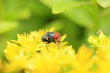 A fly is in the flower, close-up lens - 184111581