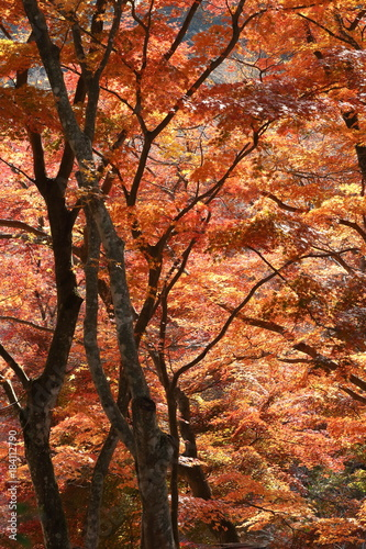 Poster Rood traf. 紅葉の風景