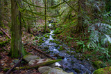 Waterfall stream and old growth rain forest in the trails of Ladysmith, BC, Canada