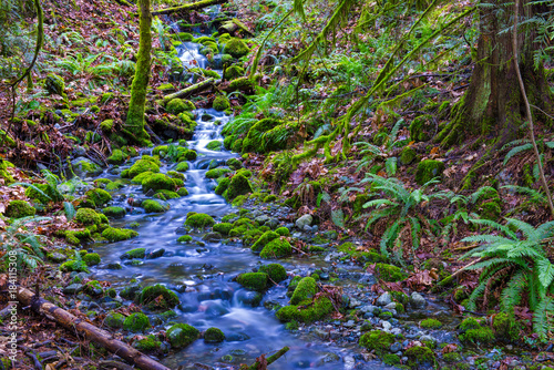 Waterfall stream and old growth rain forest in the trails of Ladysmith, BC, Canada - 184115308