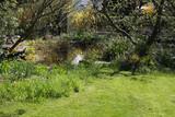 Frühling am Gartenteich - 184128539