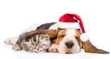 Tabby kitten sleeping, covered ear basset hound puppy in red santa hat. isolated on white background