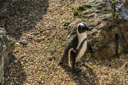 Plexiglas Pinguin Lonely Penguin