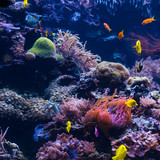 Underwater scene. Coral reef, colorful fish groups - 184156756