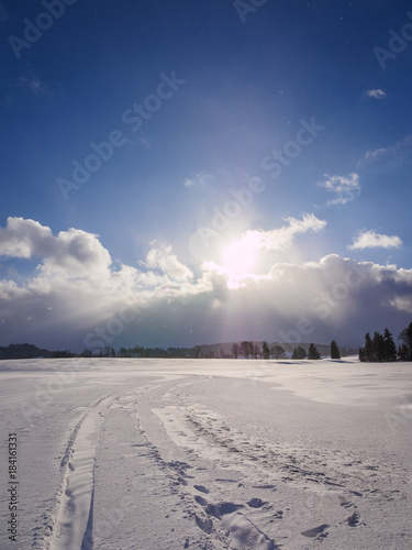 winter snow grass and landscape