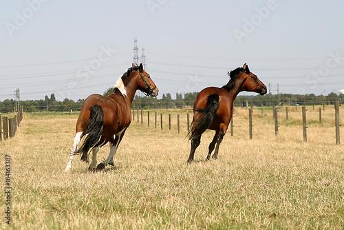 Plexiglas Paarden Pferde auf der Weide
