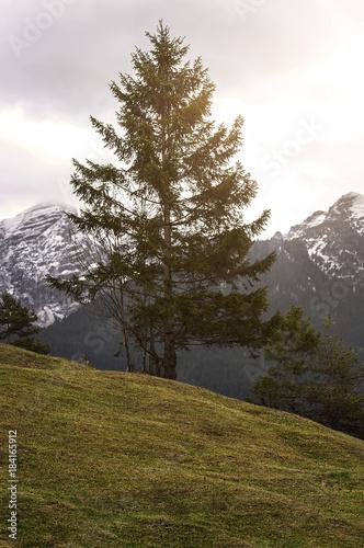 Staande foto Wit Baum vor Alpenpanorama bei Sonnenschein