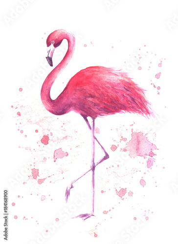 akwarela-rozowy-flaming