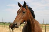 Pferde auf der Weide von Reitstall - 184173312