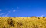 landscape green field in summer clearly sky - 184183756