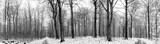 Winter scenery of a forest with snow in panorama - 184189960