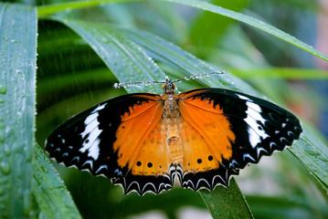 Farfalla si ripara dal temporale