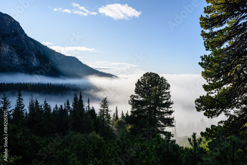 Foto op Canvas Zwart panoramic view of misty forest in mountain area with mountains hiding behind trees