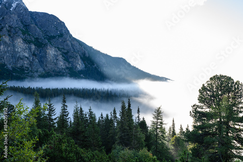Foto op Canvas Wit panoramic view of misty forest in mountain area with mountains hiding behind trees