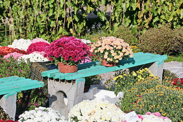 Цветы и растения - флора Украины
