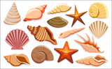 Set Of Different Shells Isolated On White Background  - 184213501