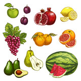 Fruit sketch of fresh sweet berry for food design