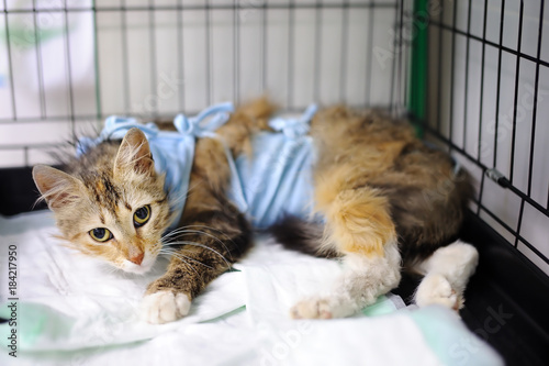 Plexiglas Kat Cat after surgery with bandage in a cage in a veterinary clinic