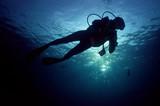 diver - 184219520