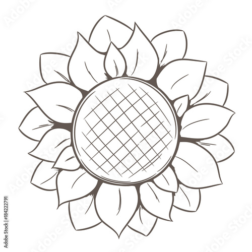 Hand drawn sunflower isolated on white background.