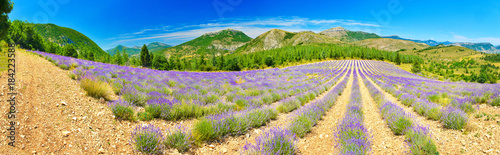Staande foto Panoramafoto s Lavender field in summer countryside